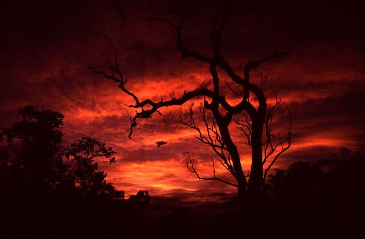 undara lava tubes sunrise landscape
