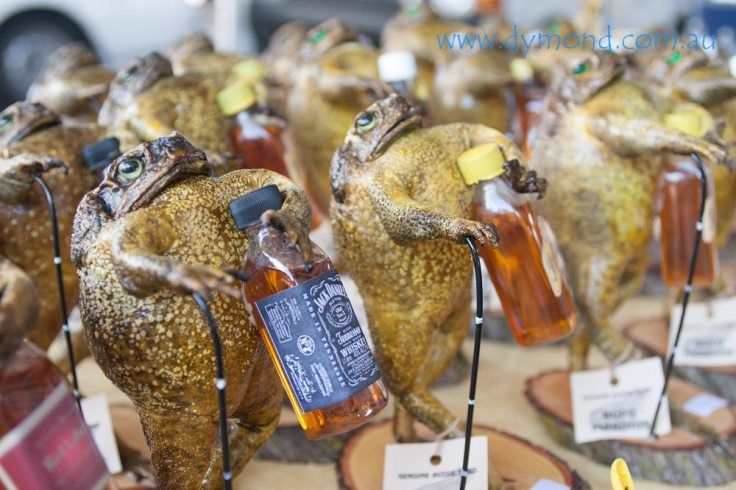 cane toad jack daniels whiskey alcohol queensland townsville